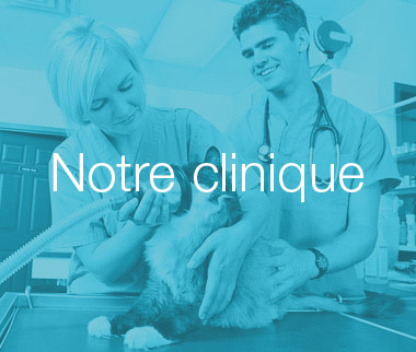 Veterinaire-mons-animavet-clinique-veterinaire-mons-2