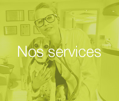 Veterinaire-mons-animavet-clinique-veterinaire-mons