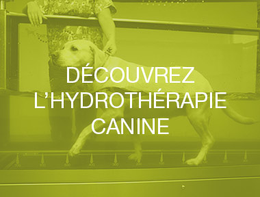 hydrotherapie-canine-mons