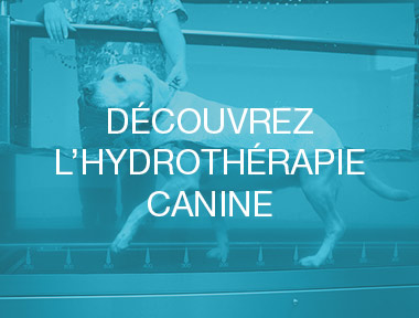 hydrotherapie-canine-mons-2