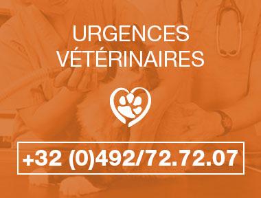 urgence-veterinaire-animavet-mons