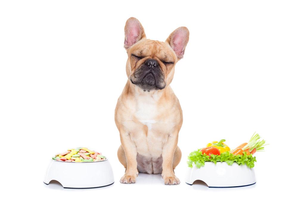 alimentation-pour-animaux-animavet-3