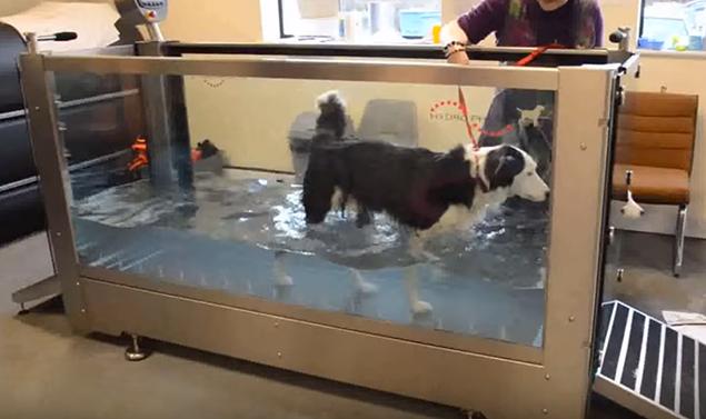 hydrothérapie canine mons